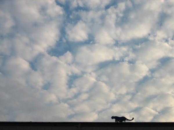 空をかけるチーター