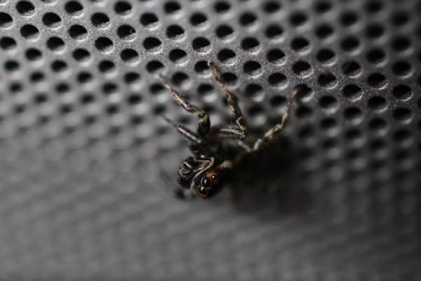 スピーカーの上のクモ
